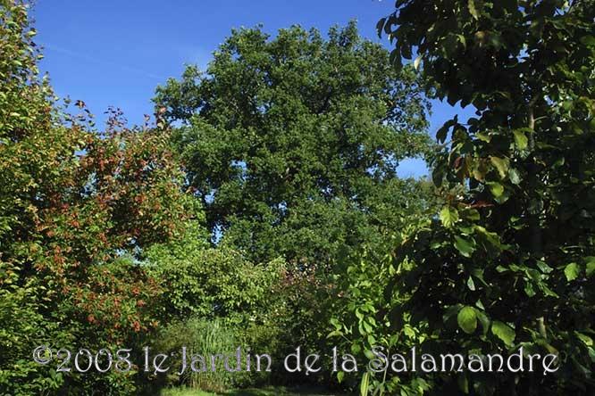 Arbres au jardin de la salamandre en dordogne - Arbres de jardin ...