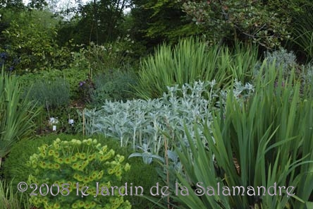Massif avec euphorbes au jardin de la salamandre en dordogne for Au jardin des malentendus